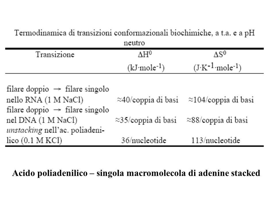 Acido poliadenilico – singola macromolecola di adenine stacked