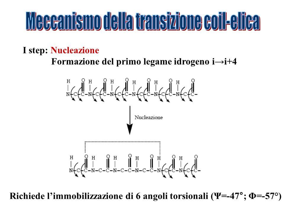 Meccanismo della transizione coil-elica