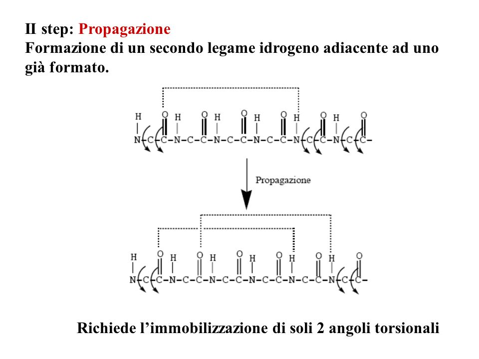 II step: Propagazione Formazione di un secondo legame idrogeno adiacente ad uno già formato.