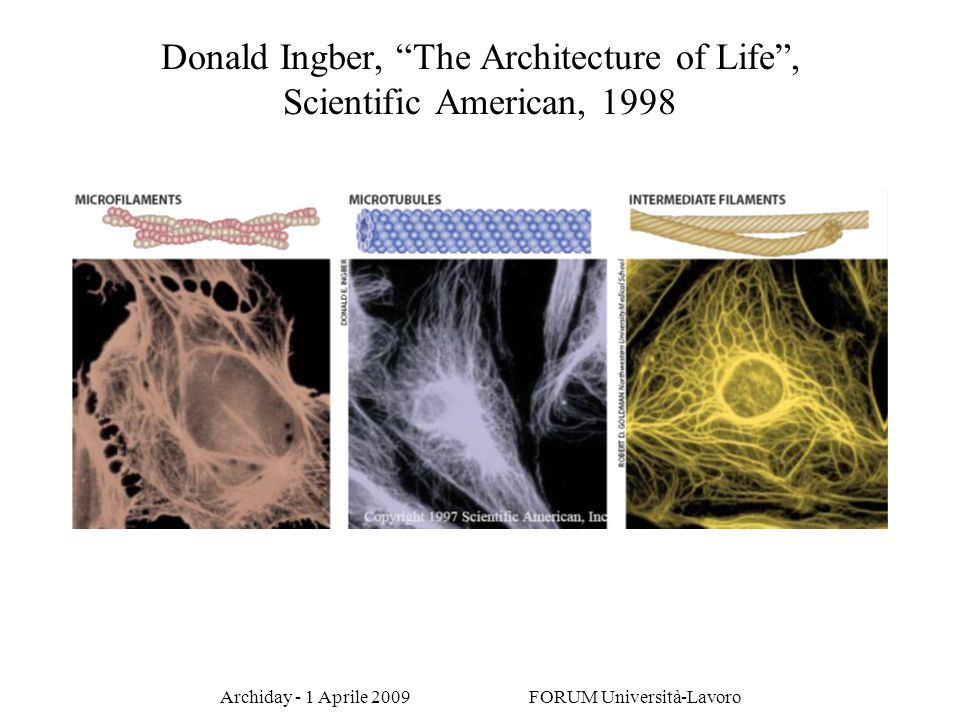 Donald Ingber, The Architecture of Life , Scientific American, 1998