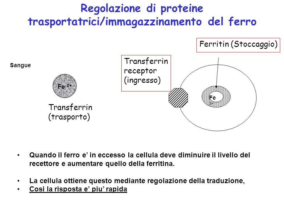 Regolazione di proteine trasportatrici/immagazzinamento del ferro