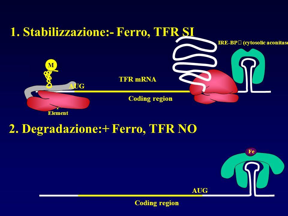 1. Stabilizzazione:- Ferro, TFR SI