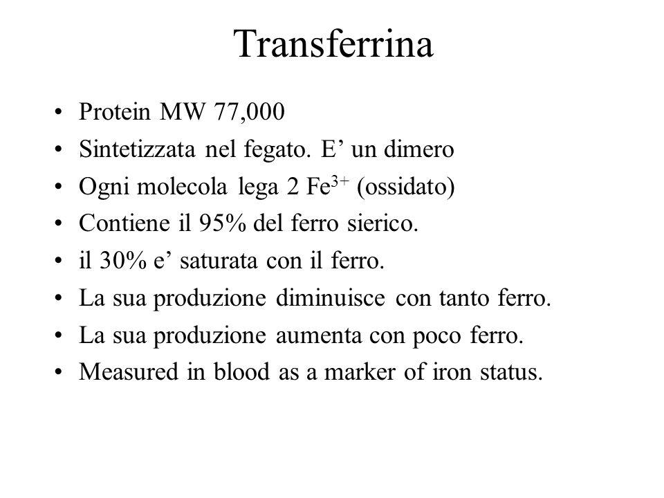 Transferrina Protein MW 77,000 Sintetizzata nel fegato. E' un dimero