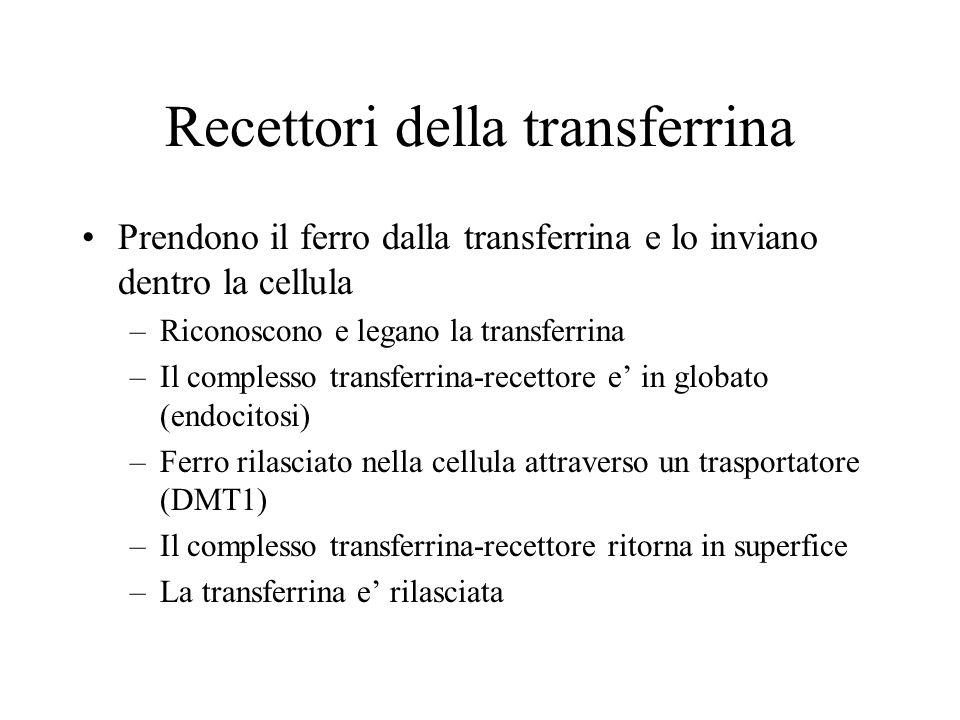 Recettori della transferrina