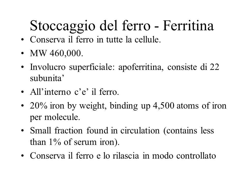 Stoccaggio del ferro - Ferritina
