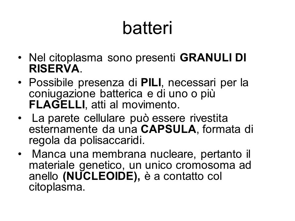 batteri Nel citoplasma sono presenti GRANULI DI RISERVA.