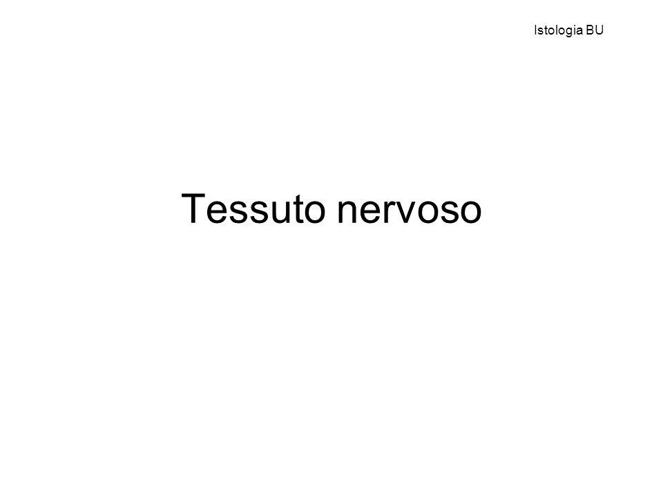Istologia BU Tessuto nervoso