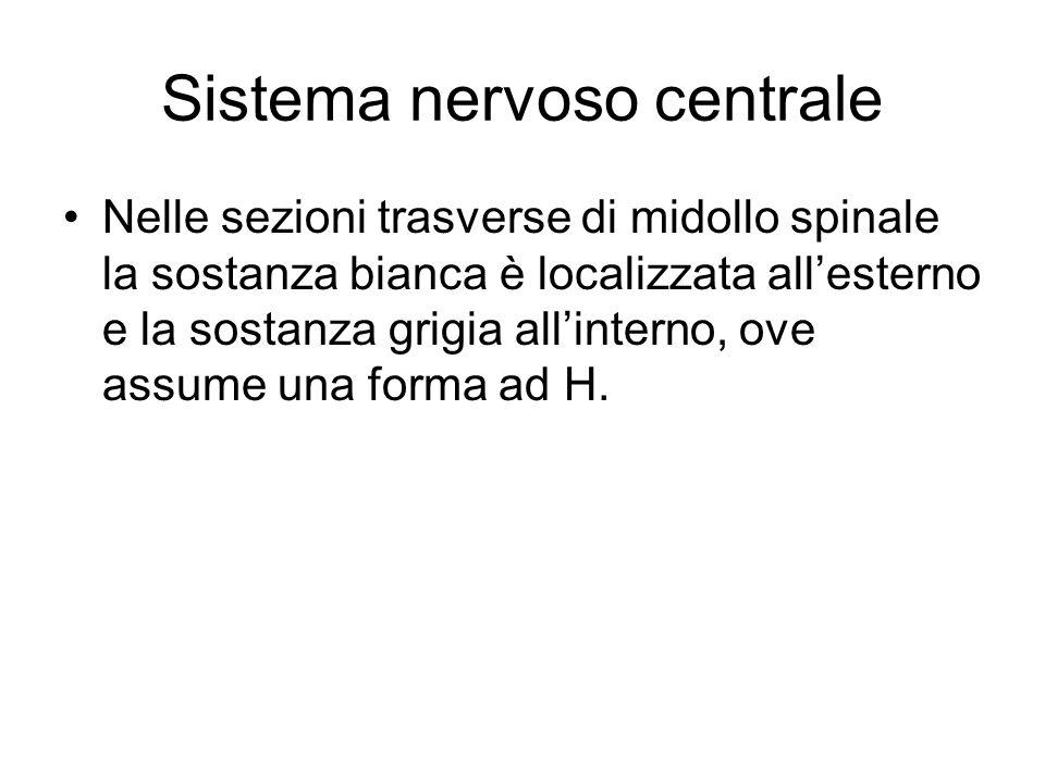 Sistema nervoso centrale