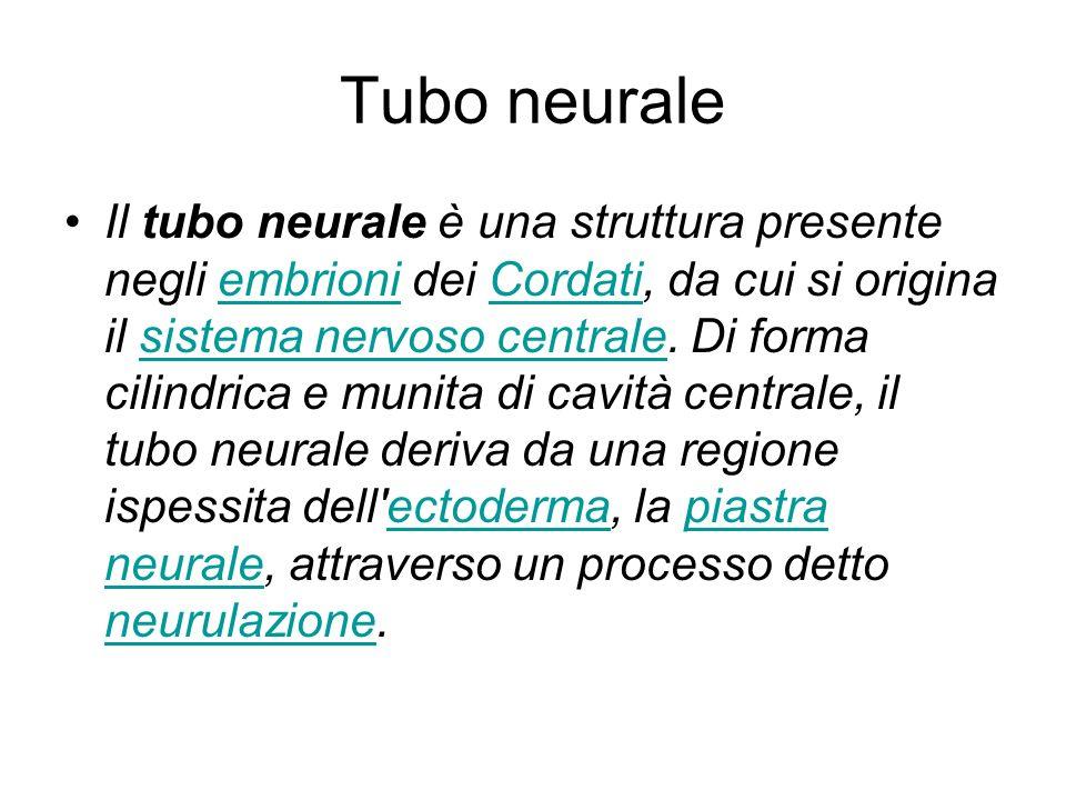 Tubo neurale