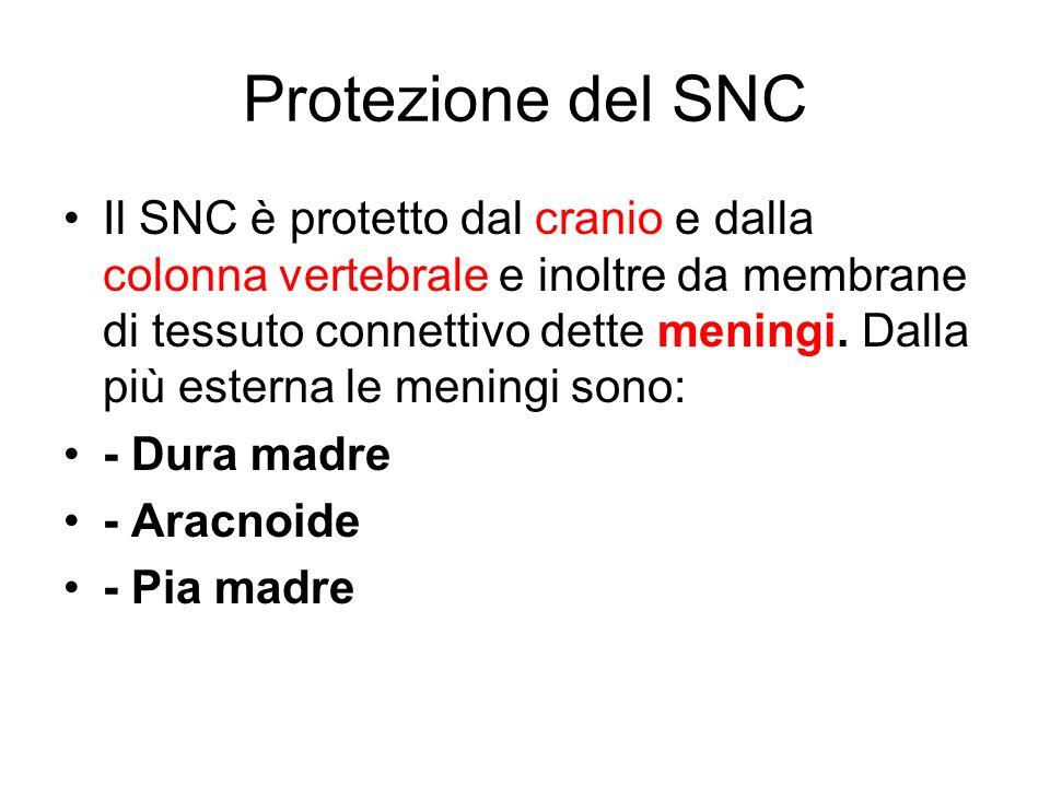 Protezione del SNC
