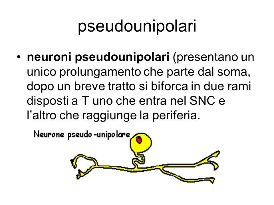 pseudounipolari