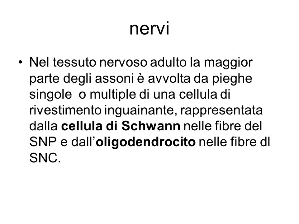 nervi
