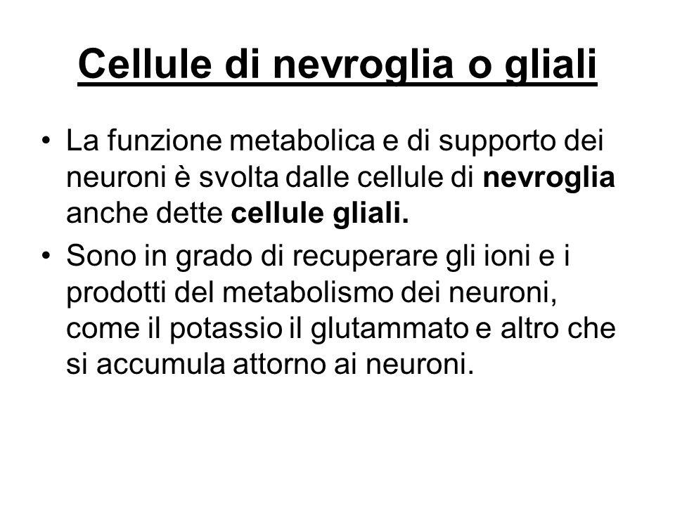 Cellule di nevroglia o gliali