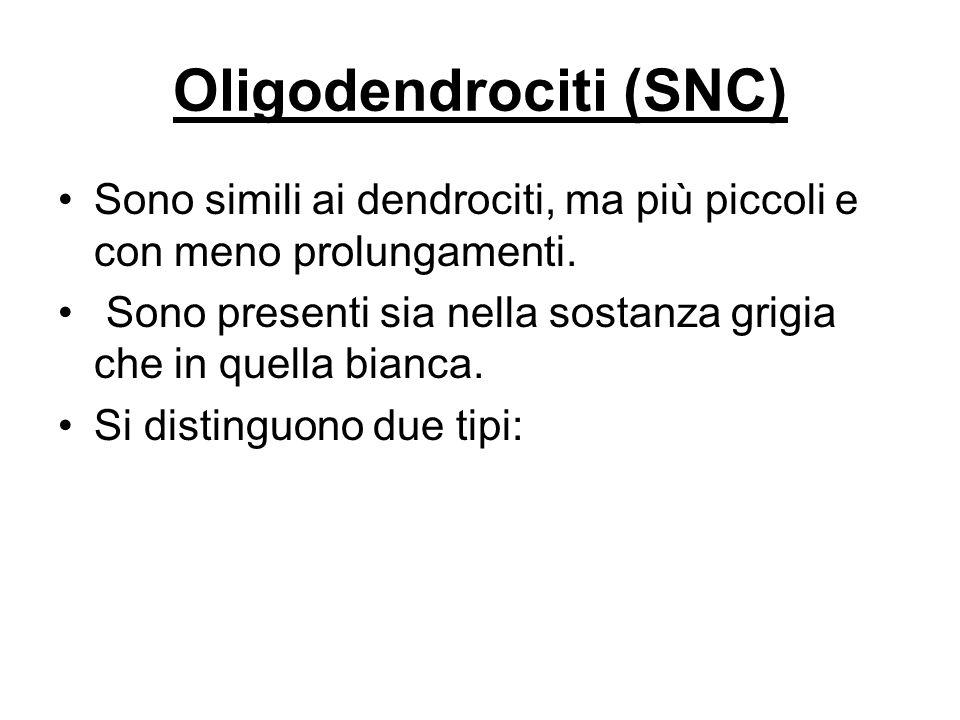 Oligodendrociti (SNC)