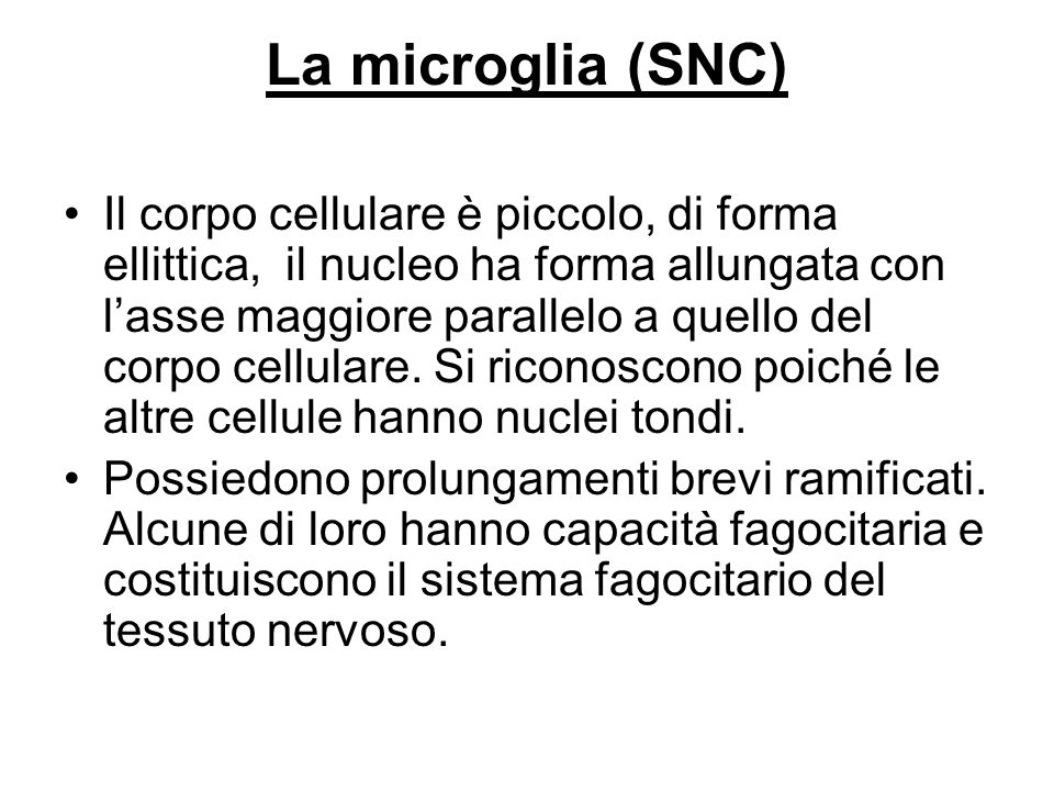 La microglia (SNC)