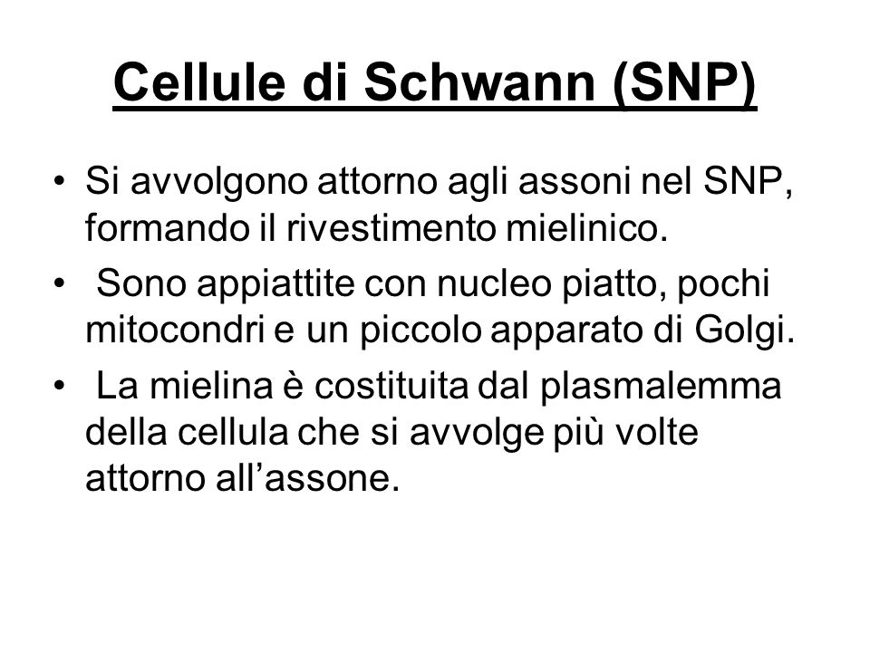 Cellule di Schwann (SNP)