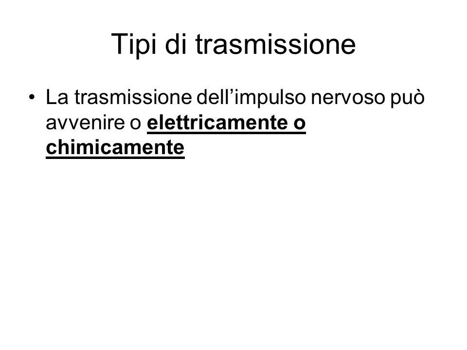 Tipi di trasmissione La trasmissione dell'impulso nervoso può avvenire o elettricamente o chimicamente.