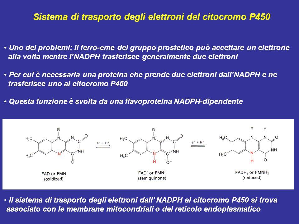 Sistema di trasporto degli elettroni del citocromo P450