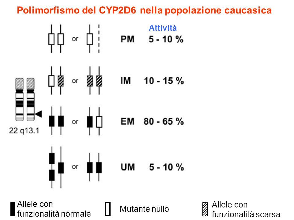Polimorfismo del CYP2D6 nella popolazione caucasica