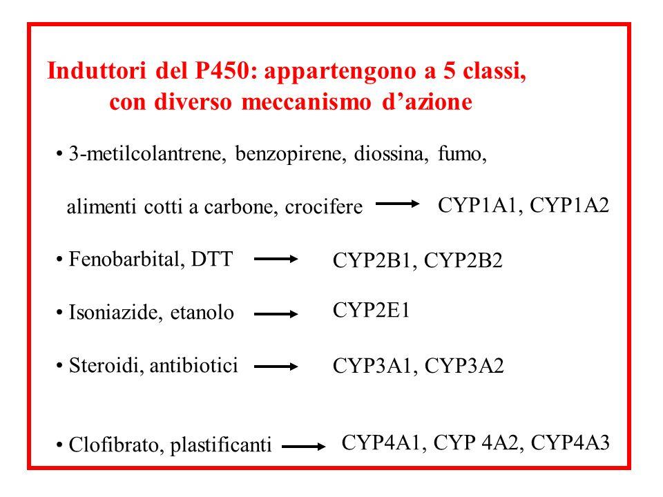 Induttori del P450: appartengono a 5 classi,