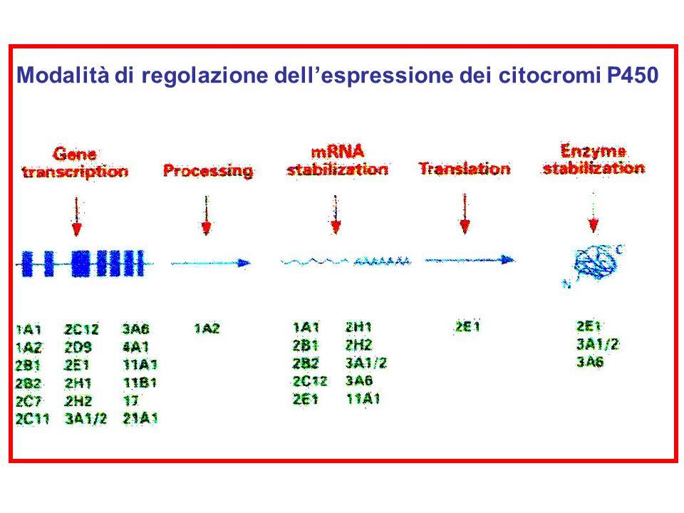 Modalità di regolazione dell'espressione dei citocromi P450