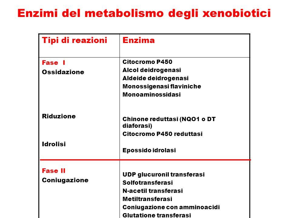 Enzimi del metabolismo degli xenobiotici