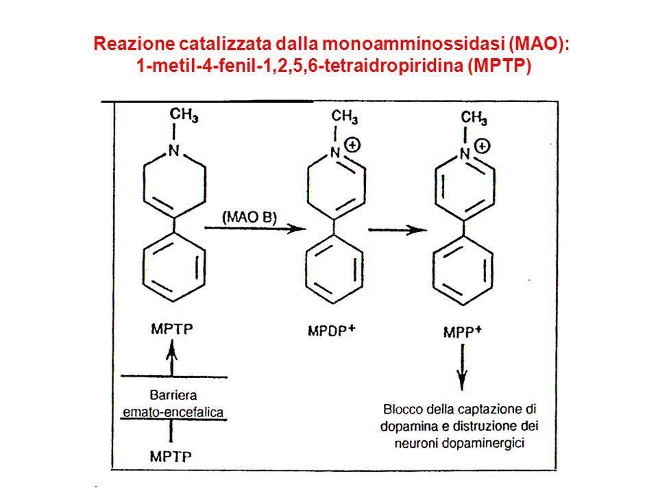 Reazione catalizzata dalla monoamminossidasi (MAO):