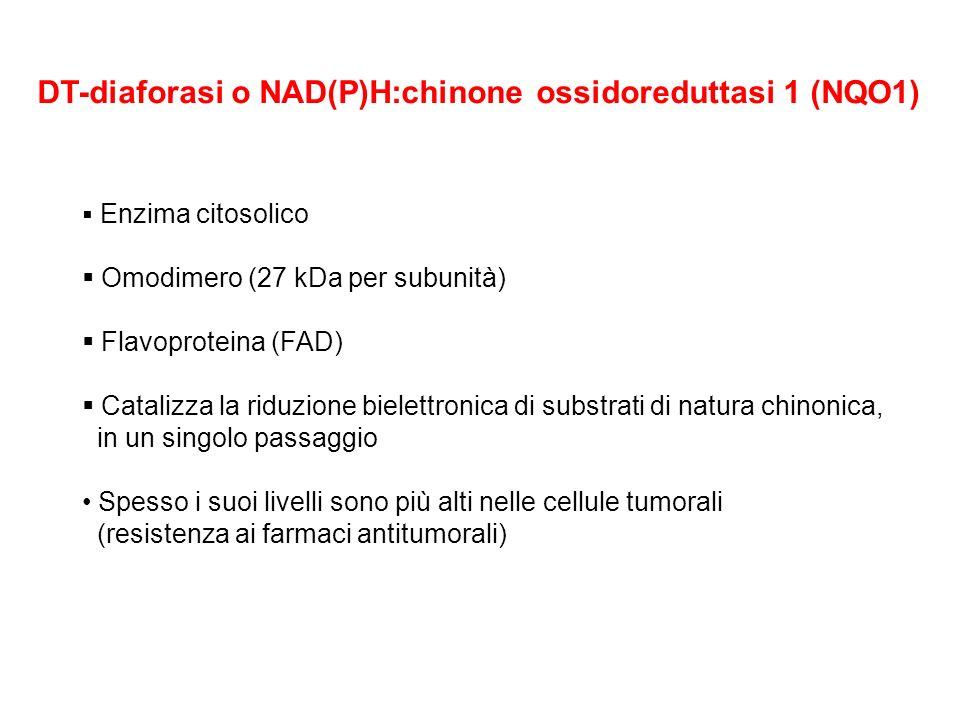 DT-diaforasi o NAD(P)H:chinone ossidoreduttasi 1 (NQO1)