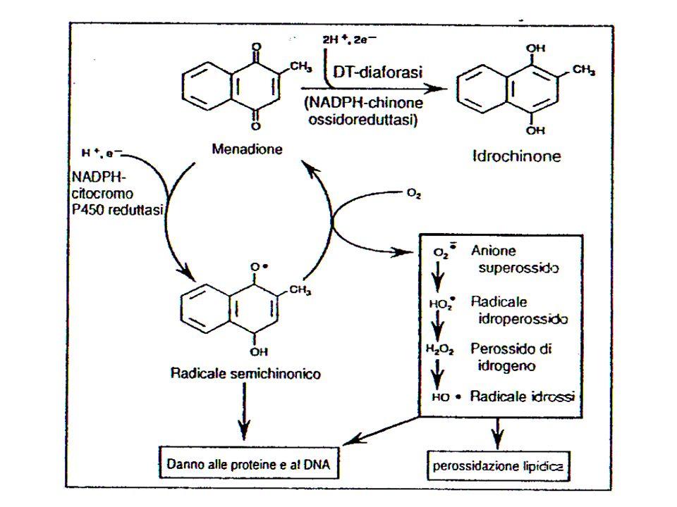 Xenobiotici di natura chinonica possono essere ridotti con un elettrone dalla P450 reduttasi. Formazione del semichinone etc. stress ossidativo.