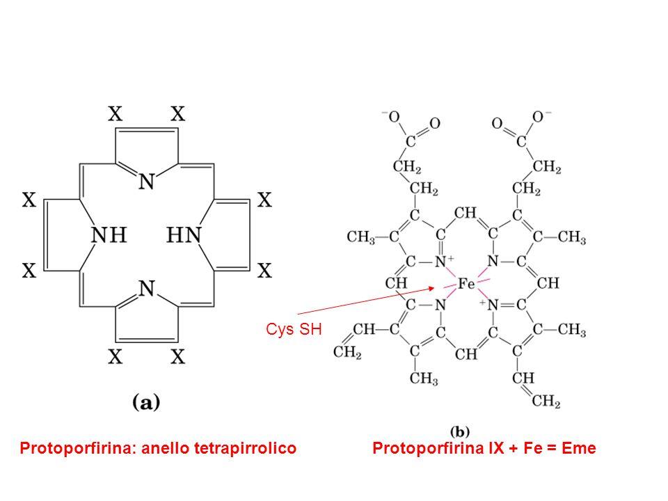 Cys SH Protoporfirina: anello tetrapirrolico Protoporfirina IX + Fe = Eme