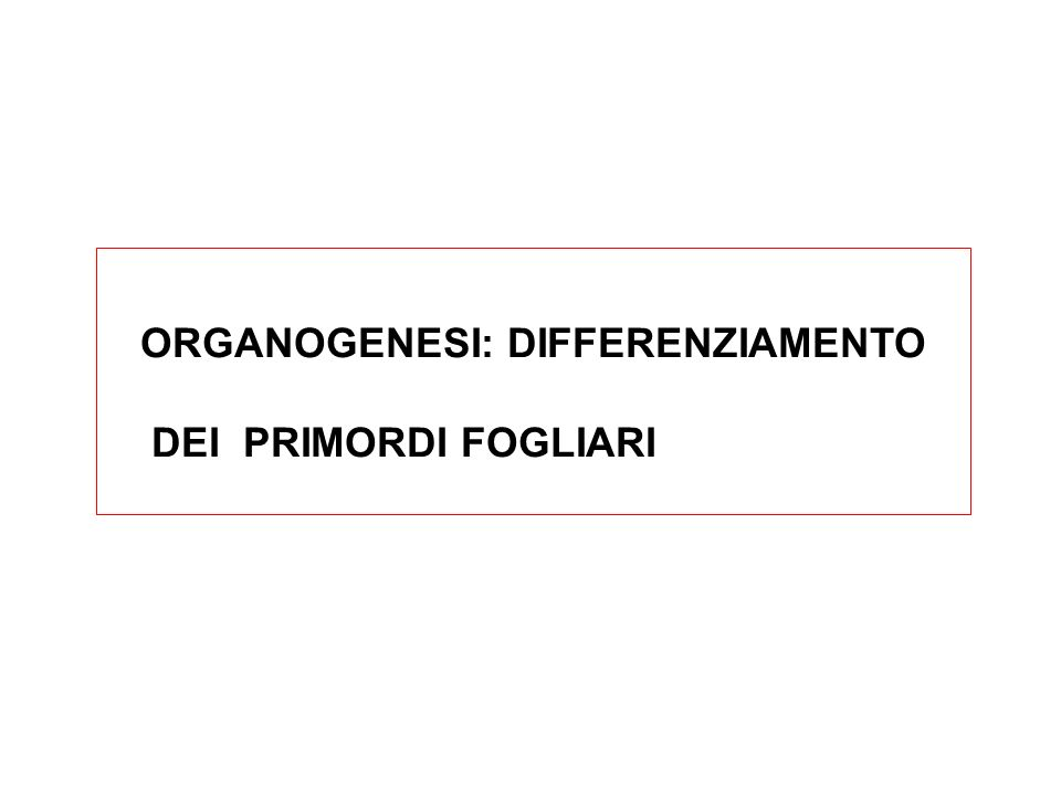 ORGANOGENESI: DIFFERENZIAMENTO