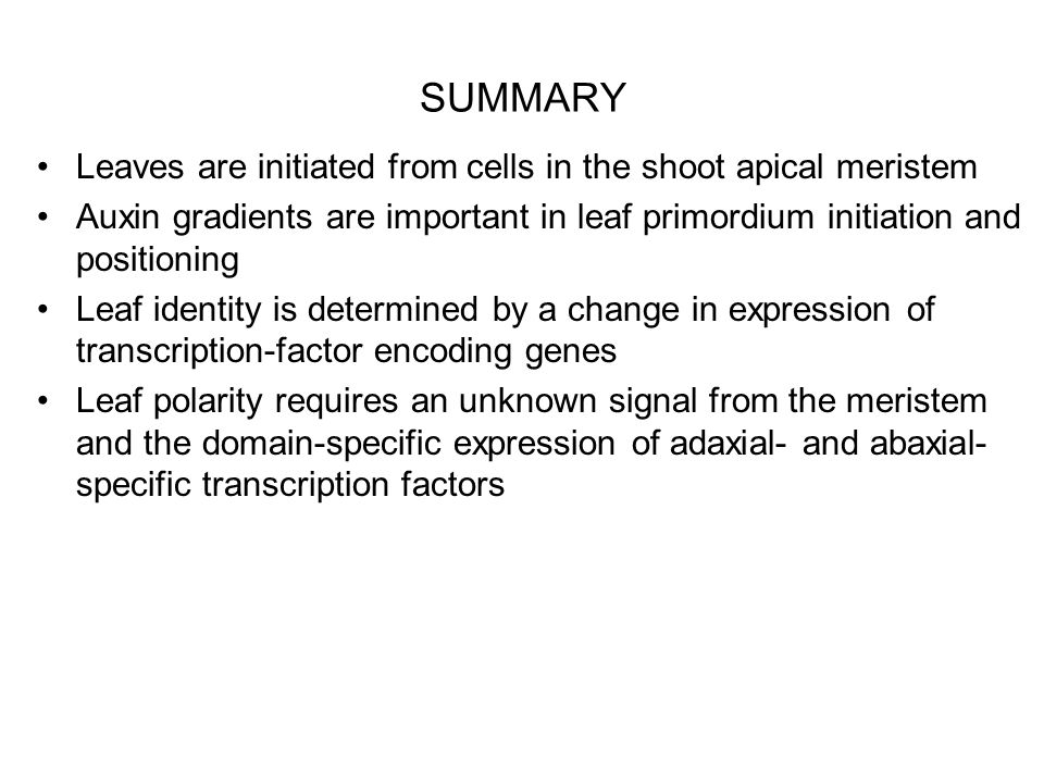 SUMMARY Leaves are initiated from cells in the shoot apical meristem