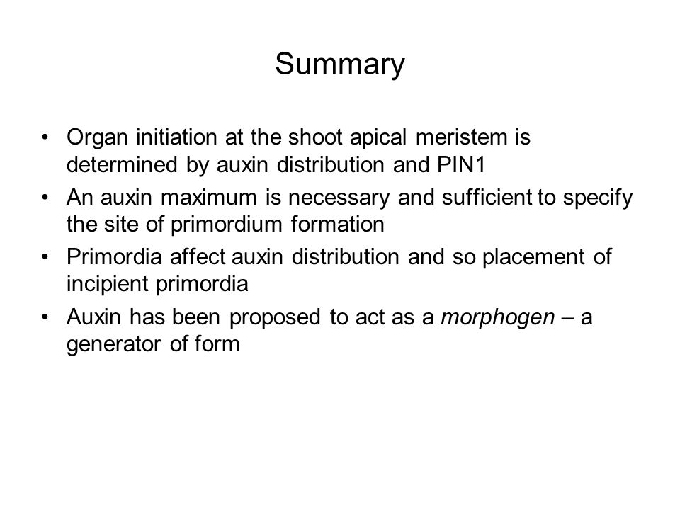 Summary Organ initiation at the shoot apical meristem is determined by auxin distribution and PIN1.