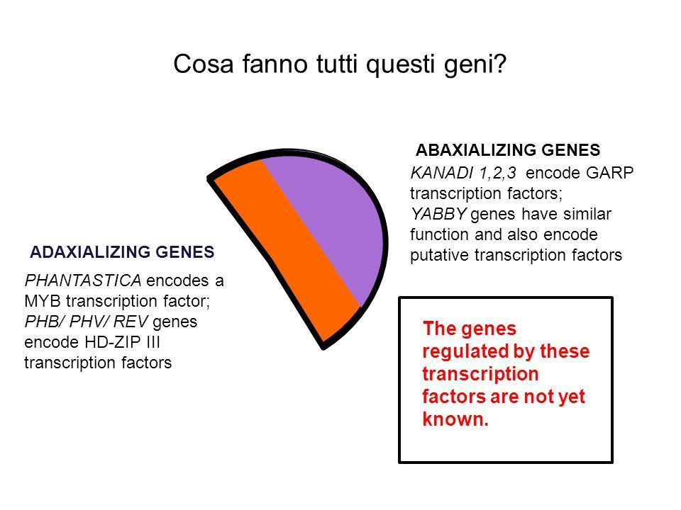 Cosa fanno tutti questi geni
