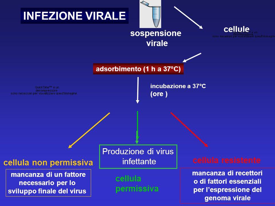 INFEZIONE VIRALE cellule sospensione virale Produzione di virus