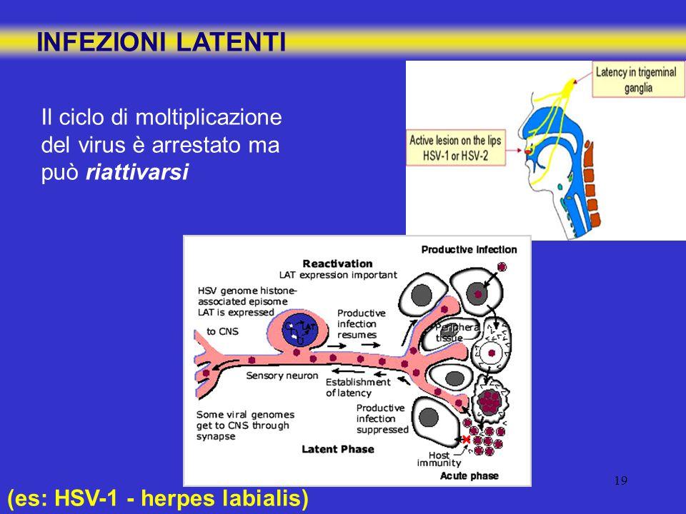 INFEZIONI LATENTIIl ciclo di moltiplicazione del virus è arrestato ma può riattivarsi.
