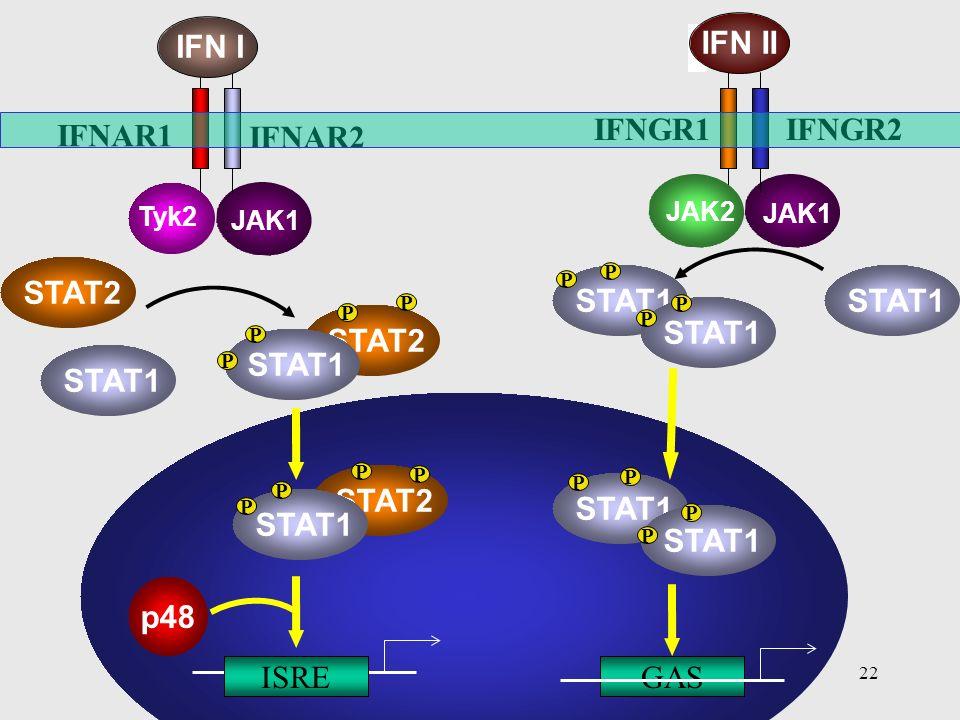 STAT1 STAT2 p48 ISRE IFNAR1 IFNAR2 GAS IFNGR2 IFNGR1 IFN I IFN II JAK2