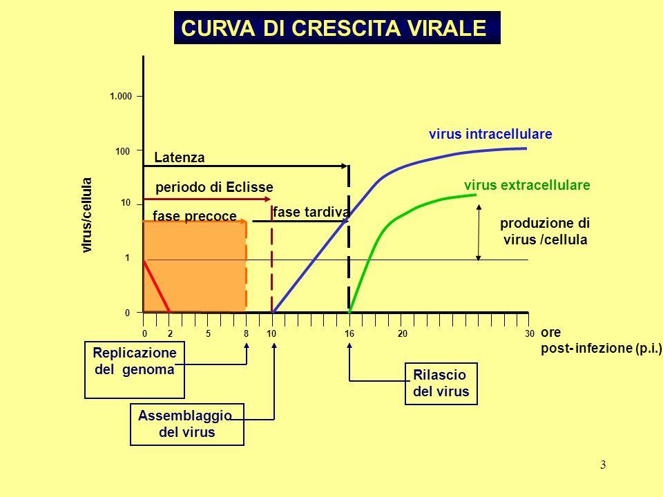 produzione di virus /cellula