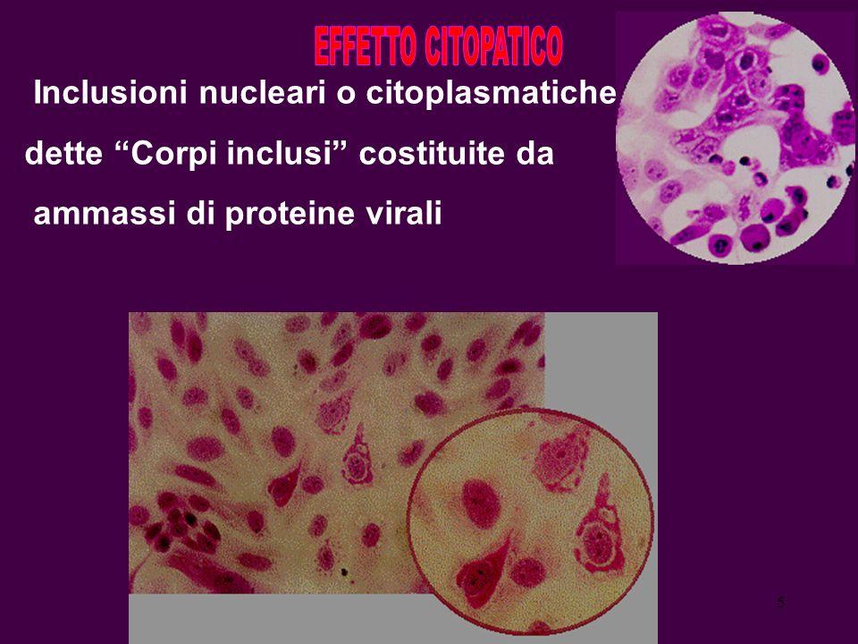 Inclusioni nucleari o citoplasmatiche