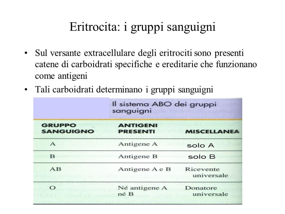 Eritrocita: i gruppi sanguigni