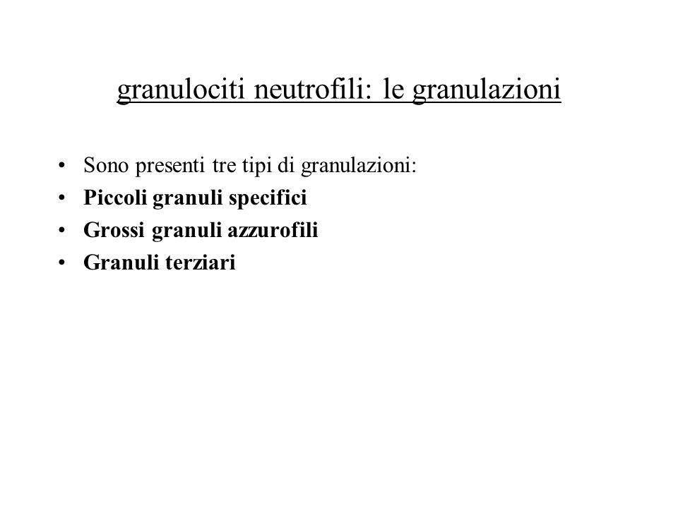 granulociti neutrofili: le granulazioni