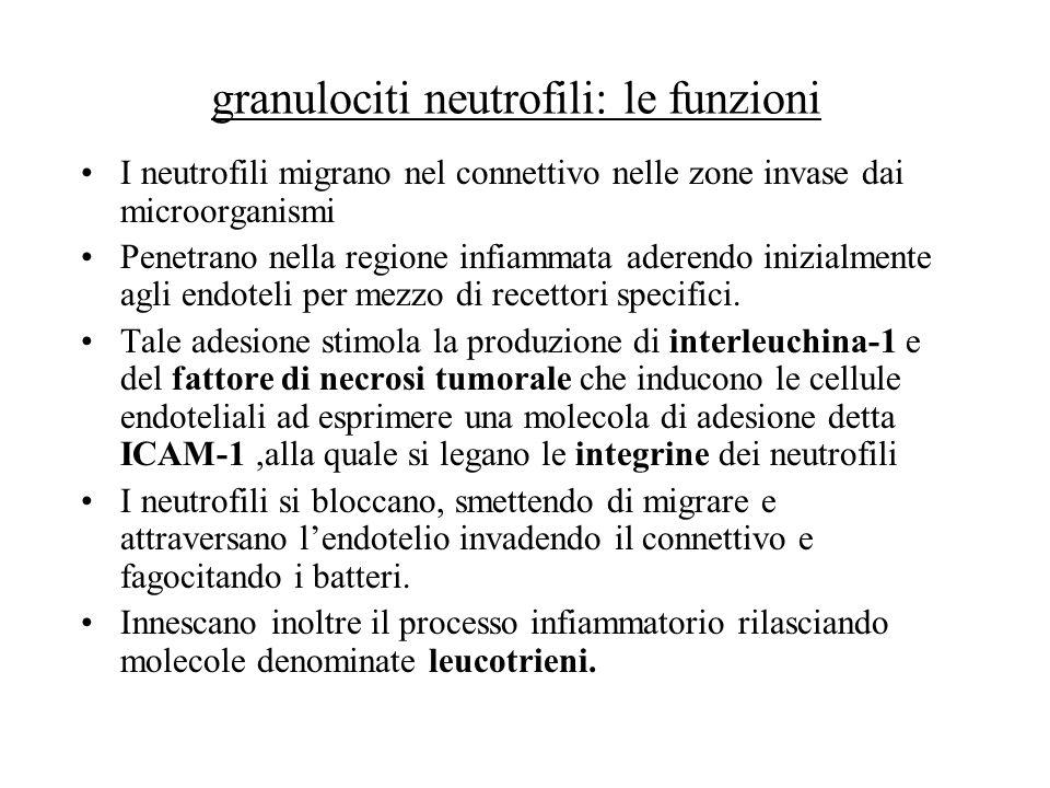 granulociti neutrofili: le funzioni