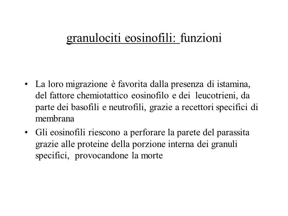 granulociti eosinofili: funzioni