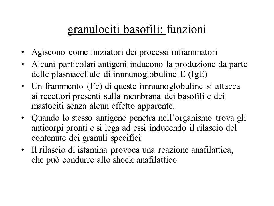 granulociti basofili: funzioni