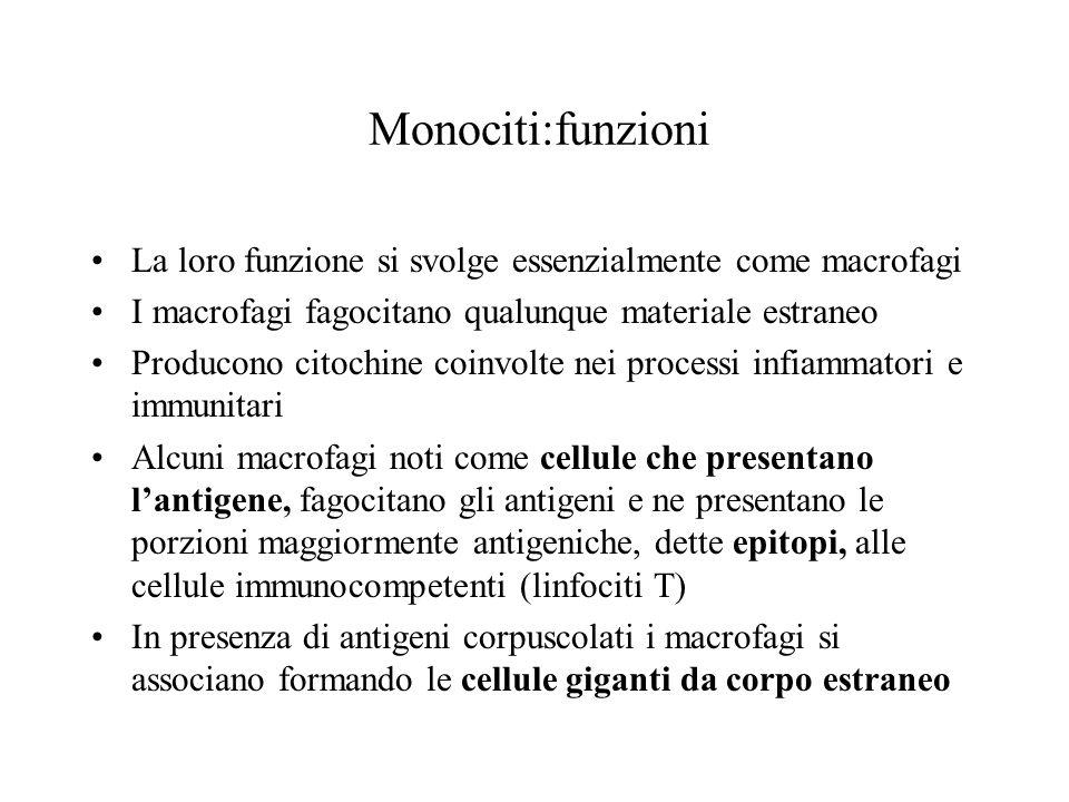 Monociti:funzioni La loro funzione si svolge essenzialmente come macrofagi. I macrofagi fagocitano qualunque materiale estraneo.