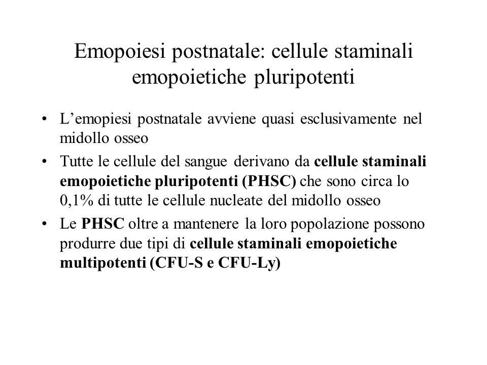 Emopoiesi postnatale: cellule staminali emopoietiche pluripotenti