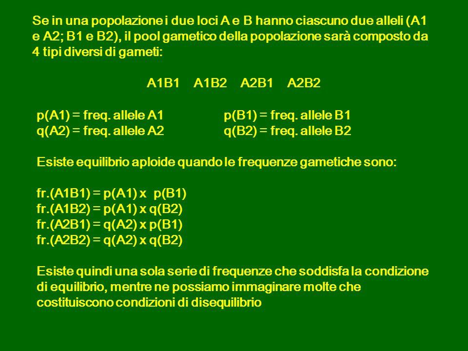 Se in una popolazione i due loci A e B hanno ciascuno due alleli (A1 e A2; B1 e B2), il pool gametico della popolazione sarà composto da 4 tipi diversi di gameti:
