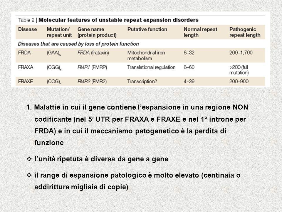 1. Malattie in cui il gene contiene l'espansione in una regione NON codificante (nel 5' UTR per FRAXA e FRAXE e nel 1° introne per FRDA) e in cui il meccanismo patogenetico è la perdita di funzione