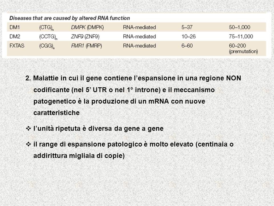 2. Malattie in cui il gene contiene l'espansione in una regione NON codificante (nel 5' UTR o nel 1° introne) e il meccanismo patogenetico è la produzione di un mRNA con nuove caratteristiche