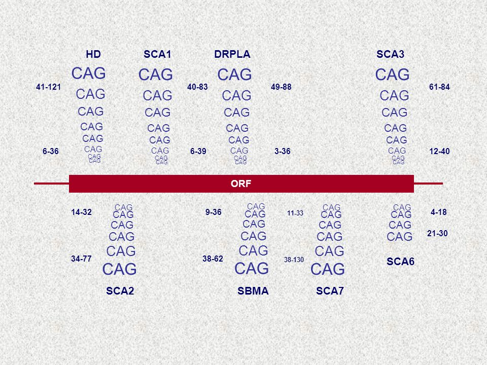 HD SCA1 DRPLA SCA3 SCA2 SBMA SCA7 SCA6 ORF 61-84 12-40 49-88 3-36